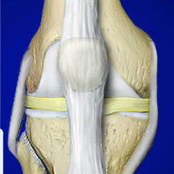 anatomy-of-a-joint-knee
