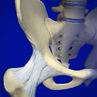 Anatomy Of A Hip Joint