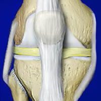 Anatomy Of A Knee Joint